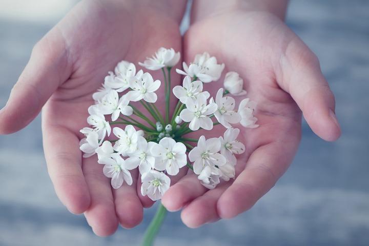flower-1283259_1280